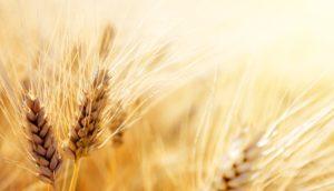 Ist Roggen- und Dinkelmehl das gesündere Mehl?